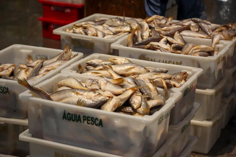 O estudo revelou que a maioria dos pescados vendidos em Belém fechou com alta.