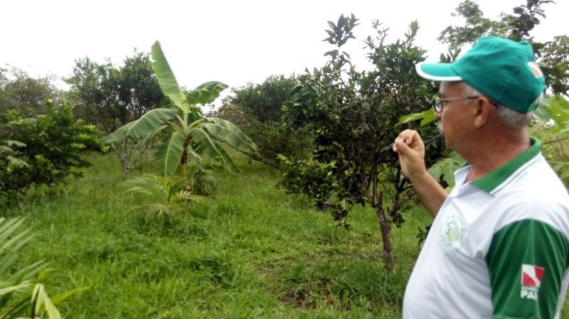 A Unidade Didática de Bragança (UDB, na foto) da Empresa de Assistência Técnica e Extensão Rural do Estado do Pará (Emater-Pará) recebe nesta terça-feira (26), cerca de 40 agricultores da comunidade Montenegro, que irão participar de reunião para tratar do Cadastro Ambiental Rural (CAR). E na quarta-feira (27), pela manhã, agricultores familiares da comunidade Camutá irão conhecer a área de 100 hectares, localizada a sete quilômetros da sede do município, que é destinada ao treinamento de extensionistas rurais e agricultores familiares. A UDB costuma receber visitantes em seus vários ambientes de produção, seja em encontros, reuniões, cursos, oficinas, palestras, intercâmbios, excursões e outras atividades, como apoio a instituições educacionais dos mais diversos níveis. A UDB funciona como vitrine de tecnologias, sendo referência na produção agroecológica e na capacitação em prol da agricultura familiar, em vários projetos simultâneos, como agroindústrias, recuperação de nascente, horta orgânica, laboratório de análise de solos, fruticultura, piscicultura e processos de compostagem do solo. Possui auditório (com capacidade para receber até 60 participantes por evento) e tem inclusive, estrutura de acomodação.  FOTO ASCOM / EMATER DATA: 20.06.2018 BRAGANÇA - PARÁ
