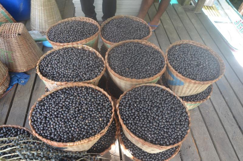 No total serão comercializadas 252 toneladas do fruto, que serão divididas em seis etapas semanais de venda.
