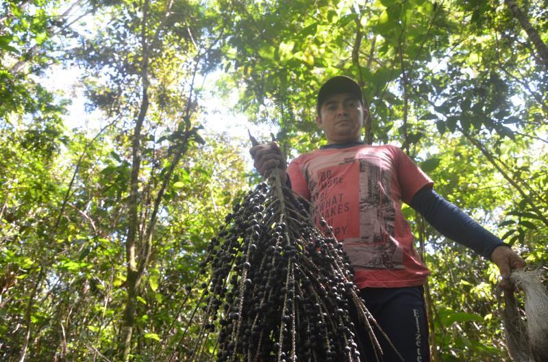 A primeira venda da cooperativa é resultado de uma parceria dos moradores da Resex com o projeto Florestas Comunitárias do IFT