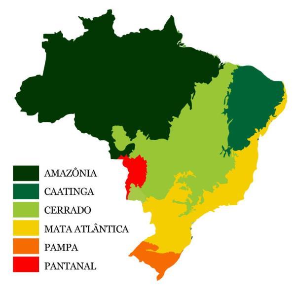Os Biomas Brasileiros correspondem ao conjunto de ecossistemas que existem no país