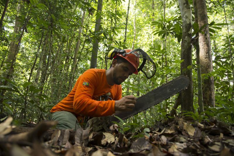 Operador afiando a motoserra na área de manejo florestal