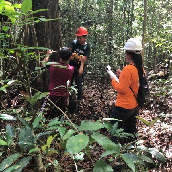 Área de manejo florestal comunitário da Resex Verde Para Sempre