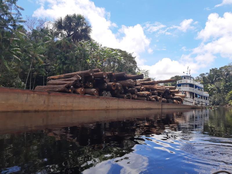 A exploração madeireira na localidade atende as recomendações do ICMBio