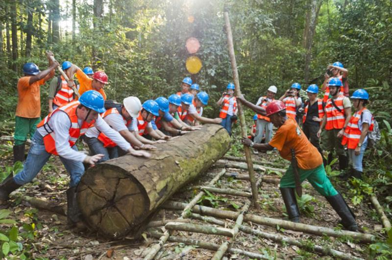 Os informativos detalham o passo a passo de cada etapa da exploração florestal com uma linguagem simples e didática.