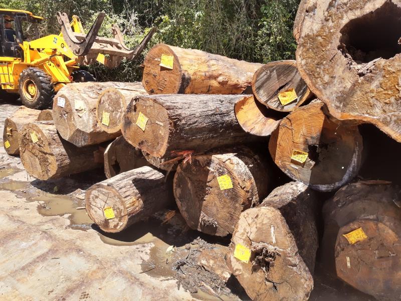 O volume de 367 m³ de madeira em tora é referente à UPA), iniciada em dezembro de 2020