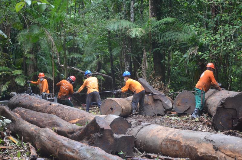 Área de manejo florestal da Resex Mapuá