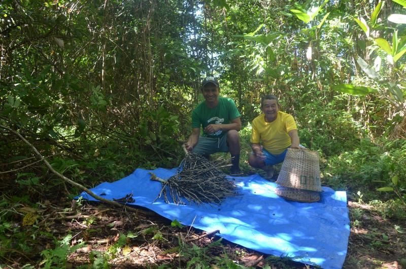 De acordo com a Conab, Pará é responsável por 95% da produção nacional de açaí