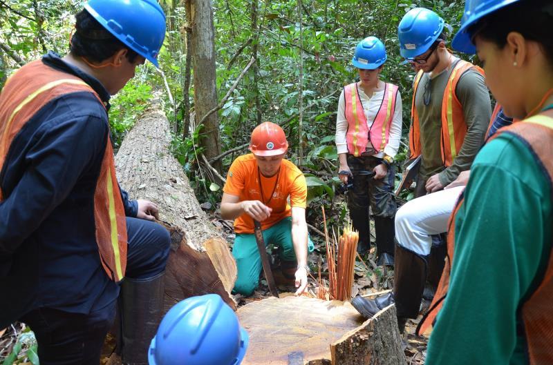 Treinamento sobre técnicas de manejo florestal, realizado pelo IFT
