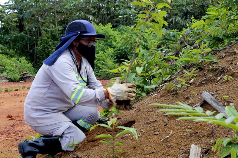 Agricultora Cleide Xavier participa há 4 anos do Programa de Reabilitação de Áreas Mineradas da Alcoa. Foto: Oslan Silva.