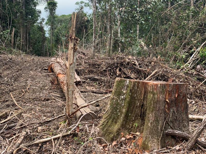 Operação foi realizadas durante todo o mês de abril nos municípios de Ipixuna do Pará, Paragominas e Tomé-Açu. DATA: 08.05.2019 BELÉM - PARÁ