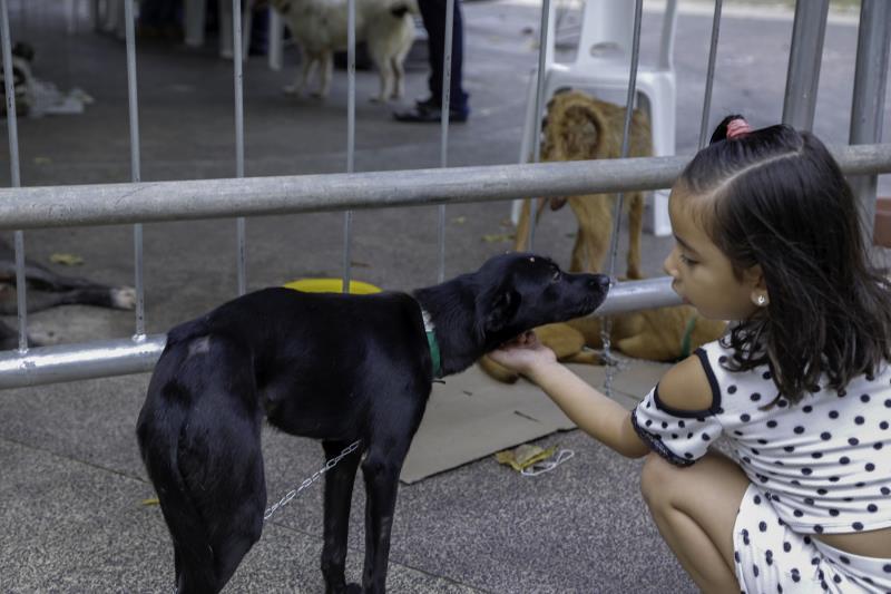 Foram disponibilizados para adoção 38 animais, entre filhotes e adultos já vacinados e vermifugados.