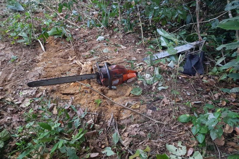Policiais prenderam em flagrante, por prática de crimes ambientais na região, Davileine Garcia Pagliuca Vieira, investigada por envolvimento no esquema