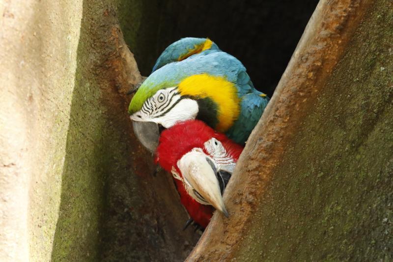 Jardim botânico nativo mais antigo do mundo, o Bosque abriga cerca de 10 mil árvores de 332 espécies diferentes e cerca 650 animais da Amazônia em liberdade e semiliberdade