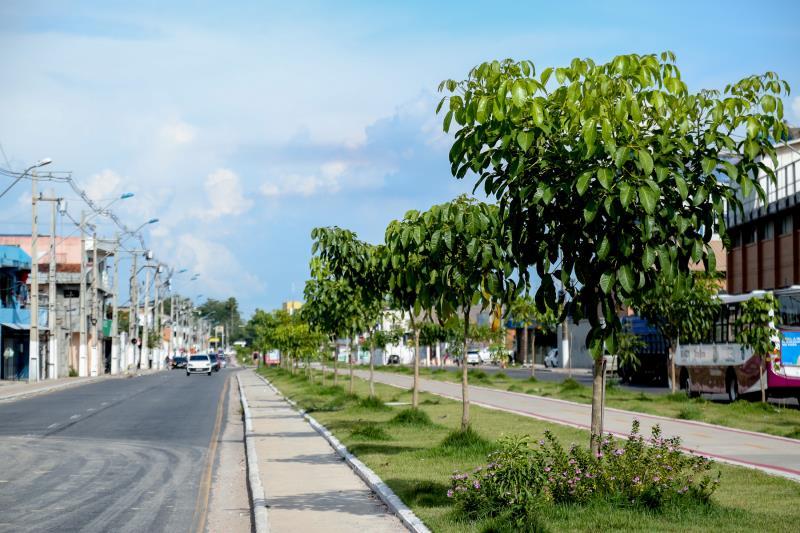 Um ano depois de ter sido entregue, totalmente reforma, a avenida Bernardo Sayão já está com ipês, usados no paisagismo, em um bom tamanho
