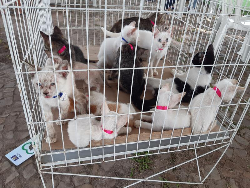 Nesta edição, mais de 30 animais foram disponibilizados para adoção