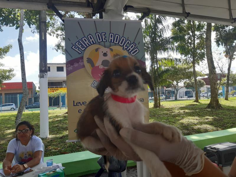 Neste domingo, 1, na Feira de Adoção de Cães e Gatos foi promovida pela Prefeitura de Belém na recém-inaugurada praça Dom Alberto Ramos, na Marambaia