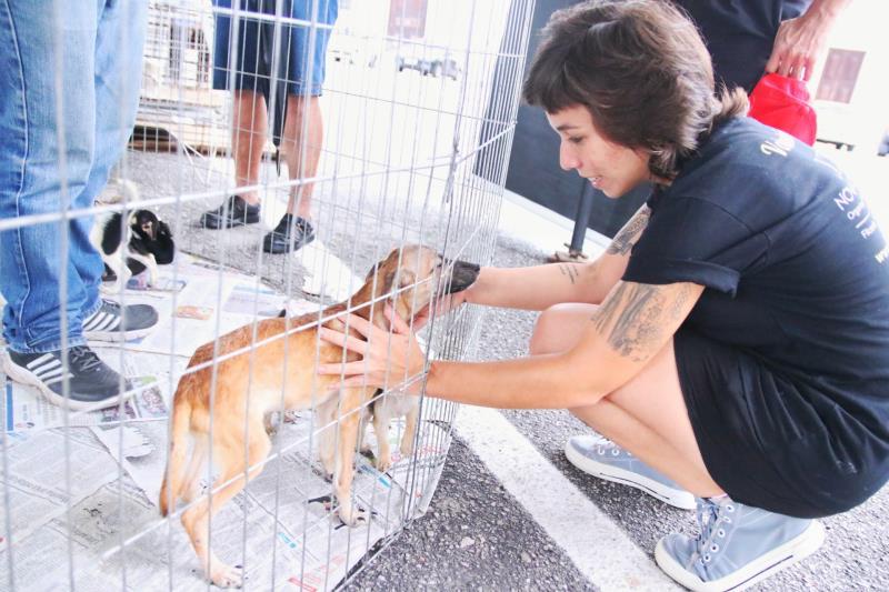 Feira de Adoção de Cães e Gatos pela primeira vez foi incluída na programação oficial da festa.