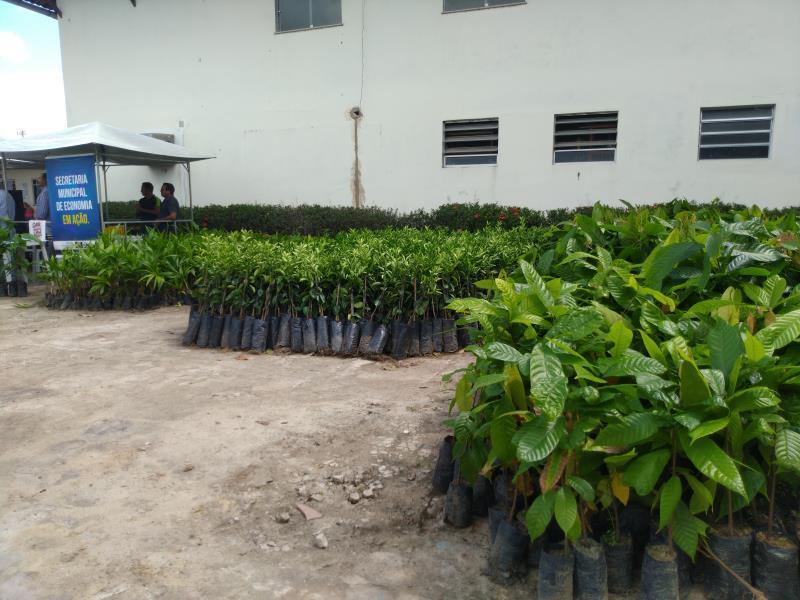 De acordo com o engenheiro agrônomo da Secon, Jorge Pantoja, a colheita dessa espécie de laranja é realizada por volta de três anos e a produção é bem promissora, já que podem ser colhidas de 3 a 4 caixas por muda