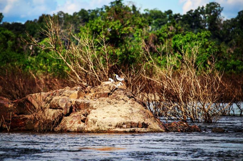 Volta Grande do Xingu