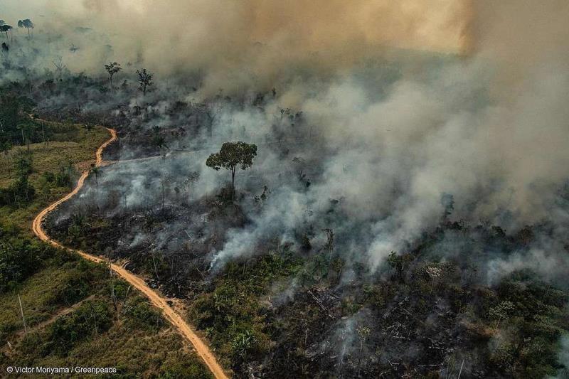 ALTAMIRA, PARÁ, BRASIL: área de queimada em Altamira no Pará. Foto: Victor Moriyama/Greenpeace.