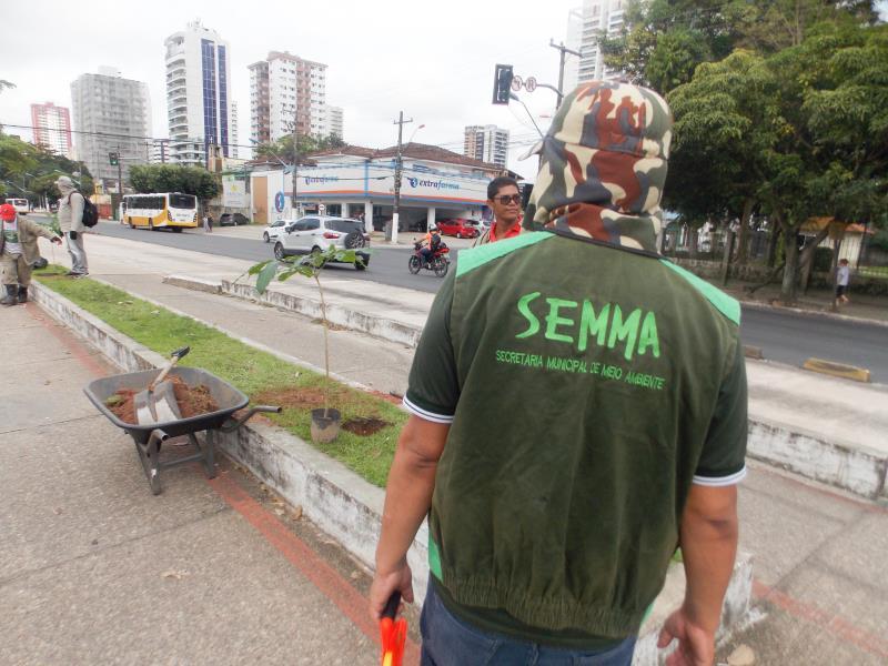Técnicos da Semma e engenheiros agrônomos fiscalizam a reposição das mudas.
