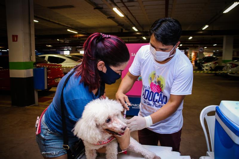 Durante a feira houve vacinação para a proteção dos animais.