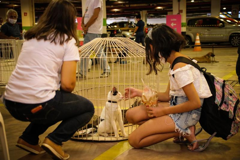 Um total de 23 animais castrados, vacinados e vermifugados foram adotados no local.