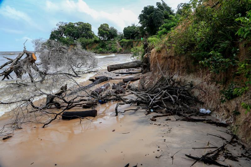 Erosão afeta a vegetação de barreiras das praias de Mosqueiro