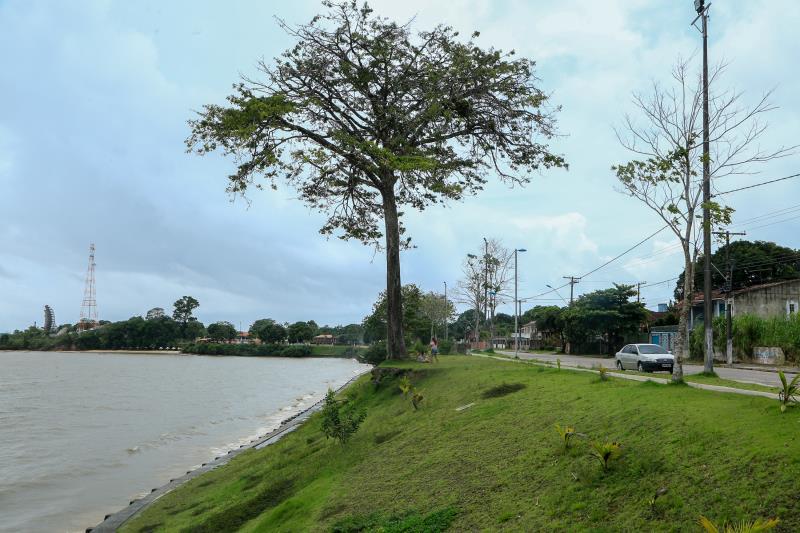 Árvore na curva do Ariramba corre risco de desabamento por causa do assoreamento