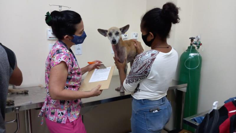 Animal recebendo os primeiros cuidados no Hospital Municipal Veterinário de Belém.