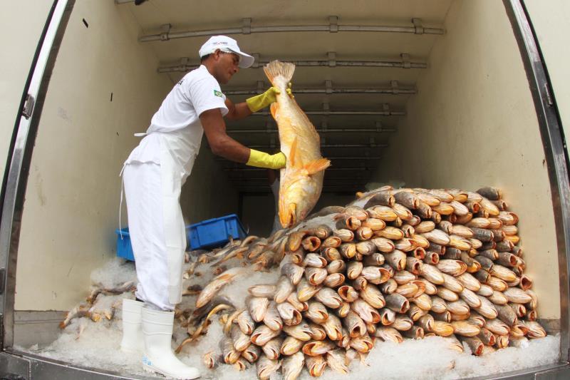 O Pará é um dos maiores produtores de pescado do Brasil.